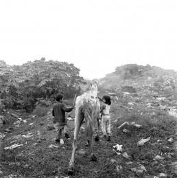 Black and White Picture of Children Walking Malnourished Horse to Eat on Trash Dump