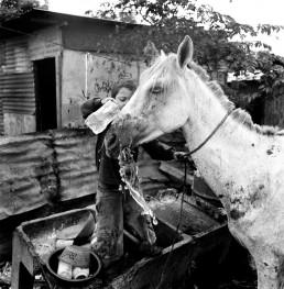 Black and White Picture of Tiny Boy Washing Malnourished Horse Nicaragua