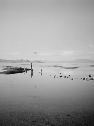 Black and white fine art landscape photography of seagull in flight over wood Great Salt Lake Utah