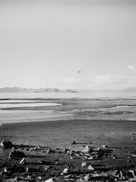Black and white fine art landscape of the Great Salt Lake's dry, rocky shore littered with seagulls Utah
