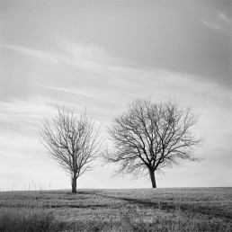 Fine art landscape photography of barren twin trees in winter atop a hil Denver Colorado